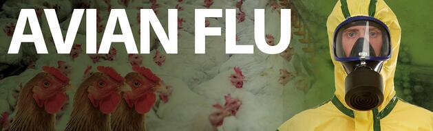 avian flu image hi res.jpg